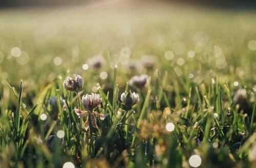Que nos indican las plantas adventicias o malas hierbas
