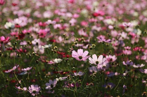 Plantas indispensables en el huerto ecológico