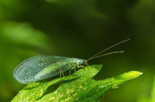 Plantas para atraer insectos beneficiosos al huerto