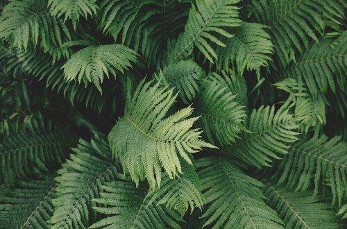 Plantas repelentes de plagas